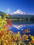Autumn Leaves Growing Near Mount Hood and Trillium Lake Fotografisk trykk av Craig Tuttle
