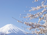 Cherry blossoms and Mt. Fuji, Japan Fotografie-Druck