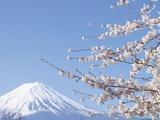 Cherry blossoms and Mt. Fuji, Japan Impressão fotográfica