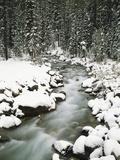 Creek Winding Way Through Forest Fotografisk trykk av Craig Tuttle