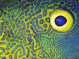 Blue and Yellow Triggerfish Eye Fotografie-Druck von Bill Varie
