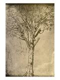Drawing a Tree by Leonardo da Vinci Reproduction procédé giclée par  Bettmann