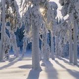 Winter Forest Fotografisk tryk af Hans Strand