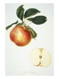 Mela Panaja Giclee Print by Bernard Rosaspina