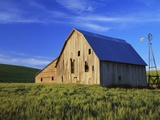Old Barn and Spring Wheat Field Photographic Print by Terry Eggers