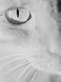 Cat's Eye Photographic Print by Henry Horenstein