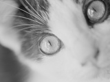 Cat's Eyes Photographic Print by Henry Horenstein