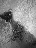 Raindrop Ripples on Fish Underwater Photographic Print by Henry Horenstein