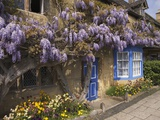 Wisteria-Covered Cottage Photographic Print by Richard Klune
