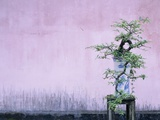 Tree in Vase and Pink Wall Photographic Print by Paul Souders