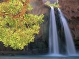 Havasu Falls Photographic Print by Ron Watts