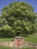 GR Royal Mail Rural Letter Box Photographic Print by Richard Klune