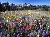 Wildflower Meadow and Tatoosh Range Fotografisk trykk av Craig Tuttle