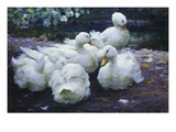 Ducks on the Bank of a River Giclee Print by Alexander Max Koester