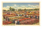 Vivaio di tulipani, Holland, Michigan Poster