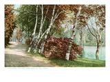 Betulle, Lake Como Park, St. Paul, Minnesota Arte