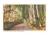 White Birches, New Hampshire Poster