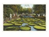 Seerosenkissen, Como Park, St. Paul, Minnesota Kunst
