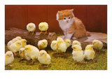 Kitten with Chicks Giclée-Premiumdruck