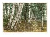 Riverside Path, White Mountains, New Hampshire Poster
