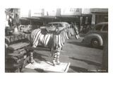 Tijuana Faux Zebra Poster