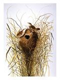 Audubon: Wren Giclee Print by John James Audubon