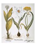 Garlic  1613