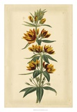 Floral Varieties IV Giclee Print by Samuel Curtis