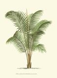 Coastal Palm II Poster