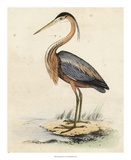 Antique Heron II Giclée-tryk