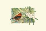 Tangara écarlate Affiches par Janet Mandel
