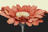 Apricot Flame I Art by Linda Wood