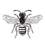 Bee Arte di Clara Wells