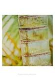 Tropical Texture II Posters par Emily Robinson