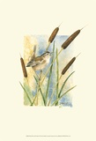 Marsh Wren and Cattails Posters par Janet Mandel