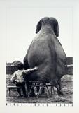 My Pal the Elephant Kunstdrucke von Mike Hollist