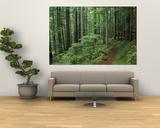 Pfad durch den Wald, Silver Falls, Mount Rainier-Nationalpark, Washington, USA Kunstdrucke von Jamie & Judy Wild
