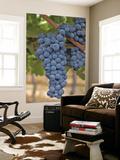 Close Up of Cabernet Sauvignon Grapes, Haras De Pirque Winery, Pirque, Maipo Valley, Chile Plakater af Janis Miglavs