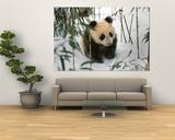 Panda Cub on Snow, Wolong, Sichuan, China Pósters por Keren Su