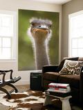Ostrich, Lewa Wildlife Conservancy, Kenya Print by Demetrio Carrasco