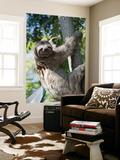 Sloth Living in Parque Centenario Póster por Margie Politzer