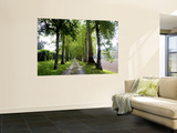 Avenue of Trees Leading Near Vitrac, Dordogne Valley Plakater af Barbara Van Zanten