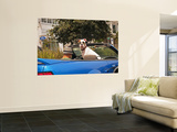 Dog Wearing Goggles, Passenger of Convertible Car on Vanness Avenue Posters par Sabrina Dalbesio