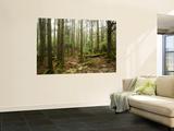 Forest Along Arakawa Trail to Jomon Sugui (Giant Tree) Plakater af Shayne Hill
