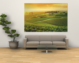 Vineyard, Hunter Valley, Australia Plakater av Peter Walton