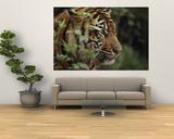A Sumatran Tiger in the Asian Domain Exhibit Plakat af Michael Nichols