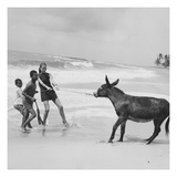 Vogue - January 1968 - Veruschka Playing with Brazillian Boys and Donkey Premium Photographic Print by Franco Rubartelli