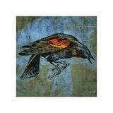 Red Wing Blackbird No. 1 Reproduction procédé giclée par John Golden