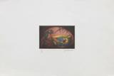 La perruche Limited Edition by Laurent Schkolnyk