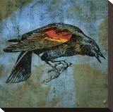 Red Wing Blackbird No. 1 Toile tendue sur châssis par John Golden